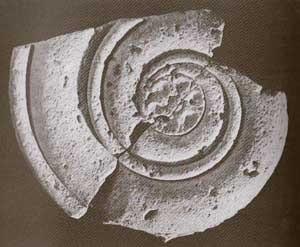 Significato della Spirale - Capitello ionico - Tempio di Locri - seconda metà del V sec. a.C.