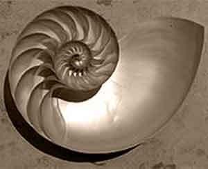 spirale-nautilus